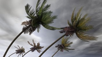 trees in a hurricane